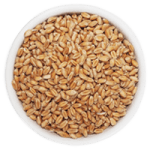 Cereal Processing - Cox & Plant